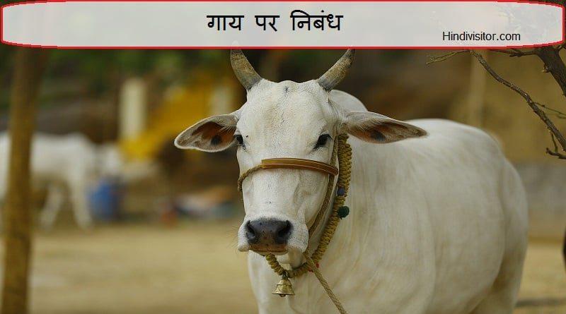 गाय पर निबंध
